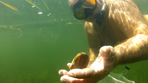 Scalloping Saint Joseph Bay