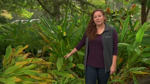 In the Gardens: December - Secret Life of Plants - Dormancy