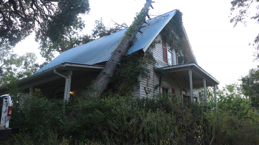 A tree rests on the roof of a home.