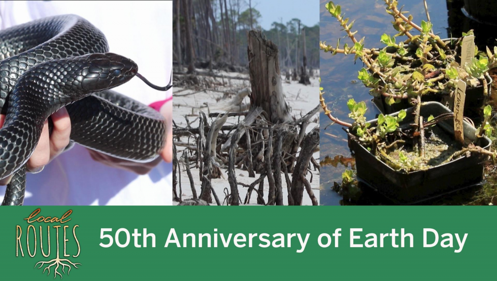 A close up of a reptile, a coast line and a plant with the title Local Routes 50th anniversary of Earth day)