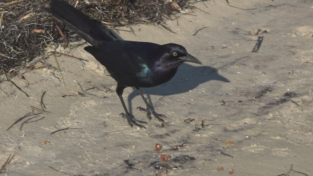 A bird that is standing in the sand
