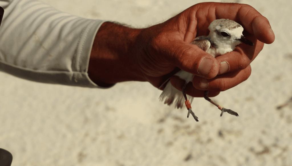 A hand holding a bird