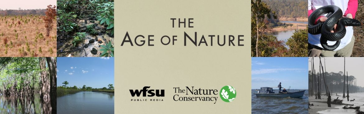 The Age Of Nature logo