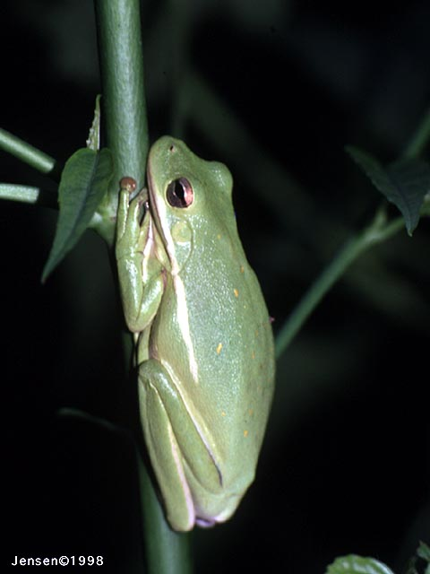 A close up of a frog