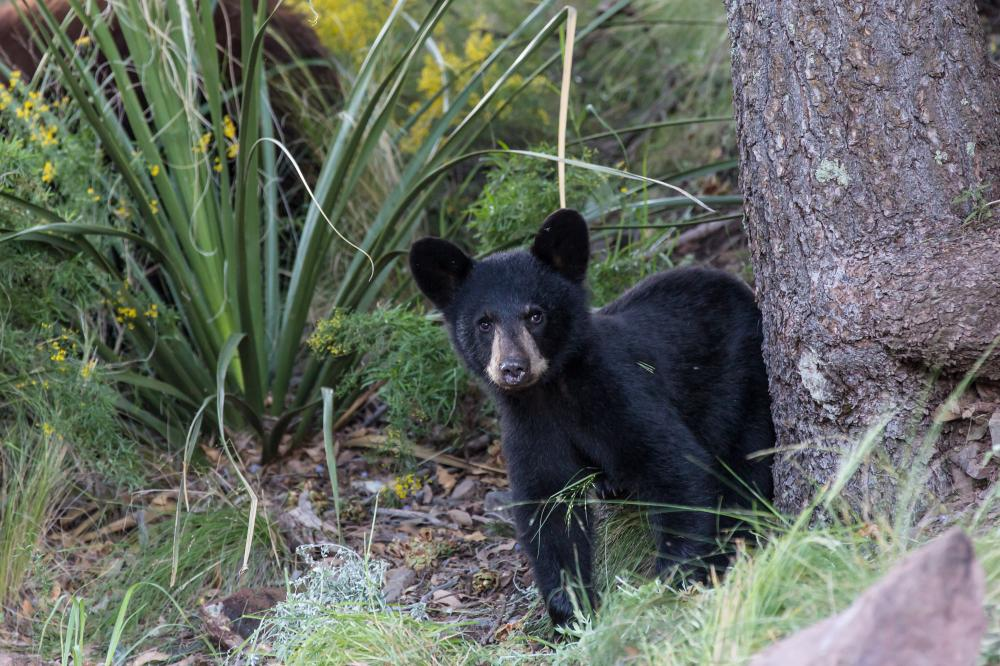 A bear in the brush