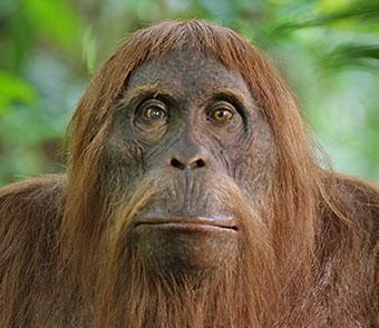 Closeup of a monkey