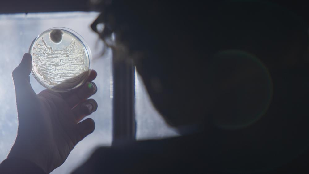 A petri dish being held up to window lighting