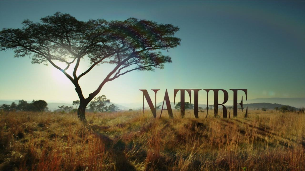 tree in savanna